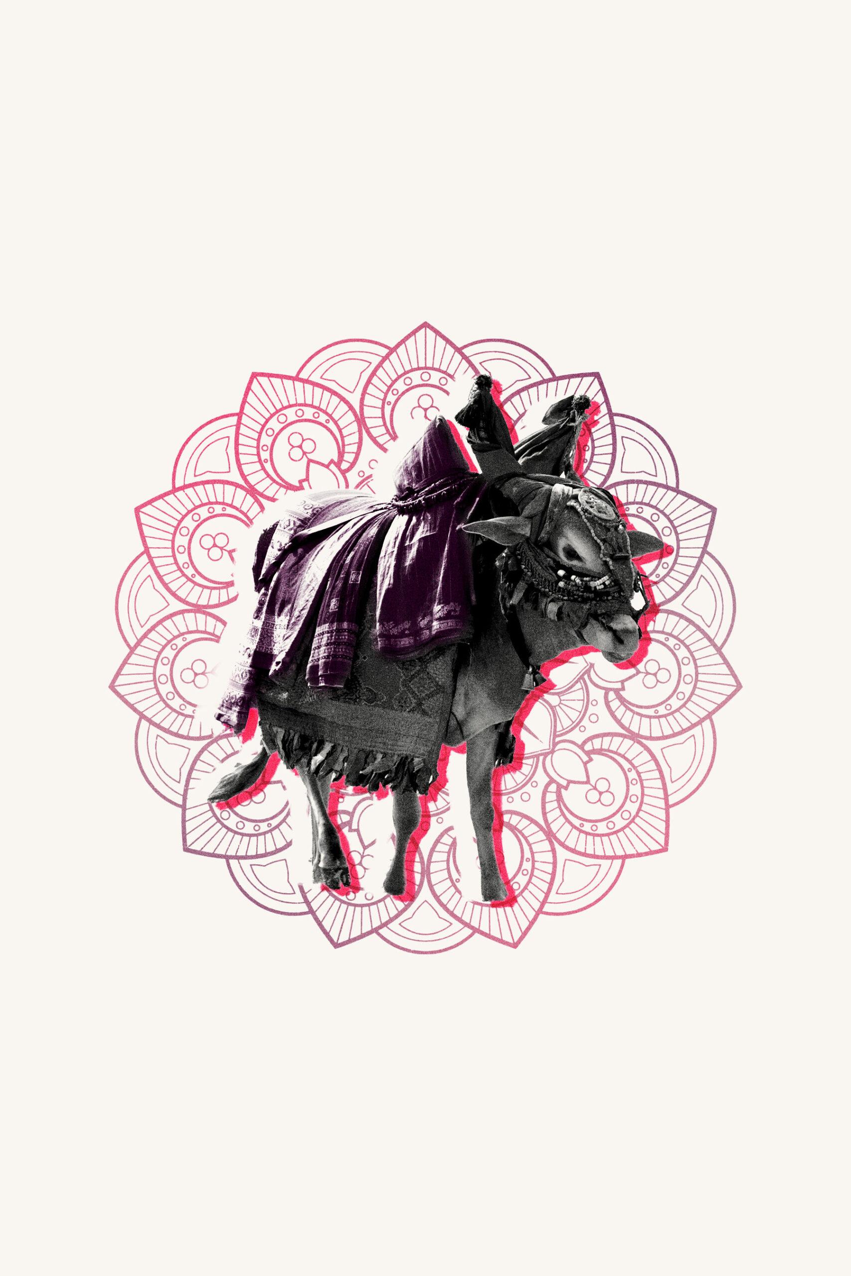 Sacred Cows - Branding Lesson